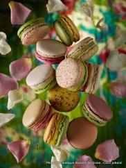 Collection Les Macarons Jardin