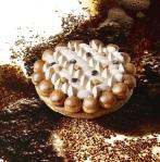 Saint Honoré Infiniment Café. Pâte feuilletée, pâte à choux, crème pâtissière allégée au café Lapar Rouge du Brésil, crème chantilly au café Bourbon Pointu de la Réunion. (c) Laurent Fau