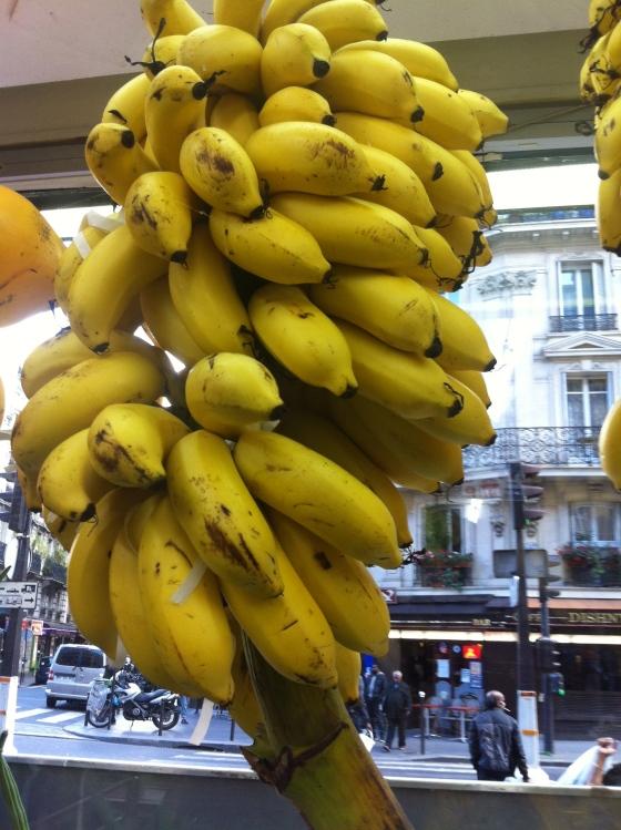 Un régime tout frais de bananes encore sur leur tige. (c) Coco Jobard
