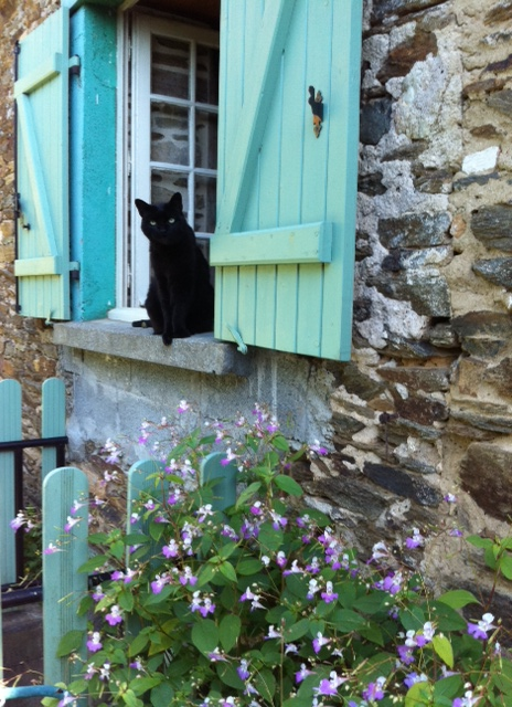 Willis en vacances, été 2013. My cat, Mr. Willis, on holidays last summer.